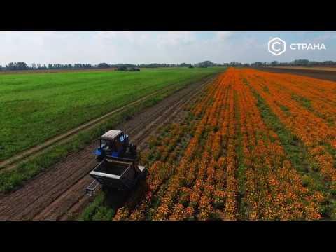 Бизнес-ботаника | Спецрепортаж | Телеканал «Страна»