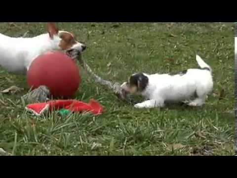 Larry is playing ball with his mom