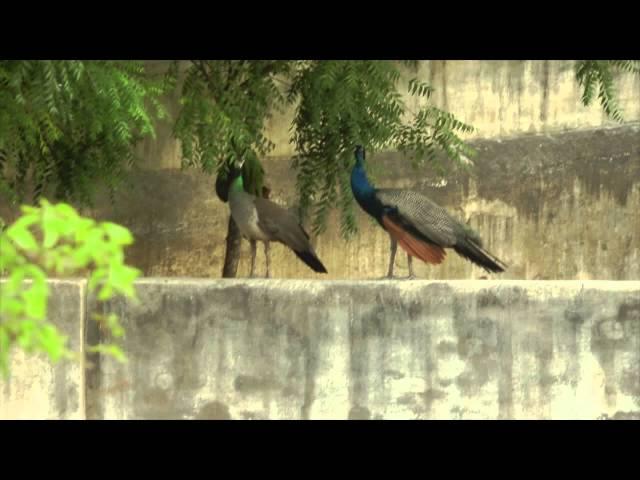 Kajri - Intro by Dr. Ram Gopal Tripathi [Folk Music Podcast]