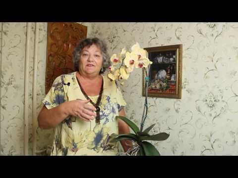 Милена смирнова астролог