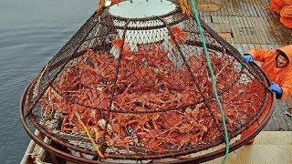 Awesome Big Alaska King Crab Fishing On The Sea - Fastest Catching & Processing King Crab