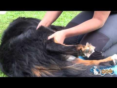 Mal di schiena e massaggio
