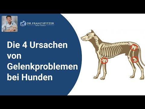 Die 4 Ursachen für Gelenk-  und Skelettprobleme beim Hund