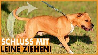 Hund zieht an der Leine I Lockere Leine mit nur einer Methode I Leinenführigkeit leicht gemacht