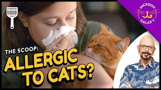 All you need to know about cat allergies & what you can do about them!