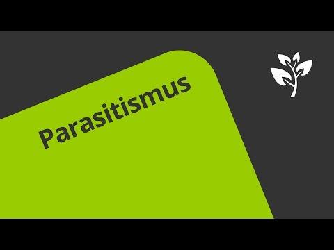 Die Parasiten im Menschen zu entgehen,