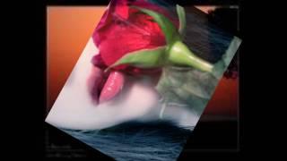 أغنية والله مايسوى. حسين الجسمي