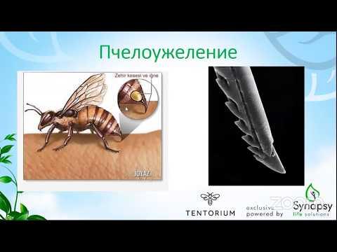 Польза и вред пчелиного яда