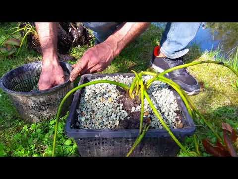 La terra di grano saraceno con kefir delle mattine per risposte di perdita di peso