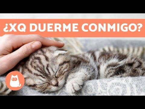 ¿Por Qué Tu Gato Duerme Contigo? 5 Razones Que Te Encantarán