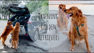 HOW I TRAINED MY GOLDEN RETRIEVERS | POTTY TRAINING A PUPPY + TRAINING A PUPPY