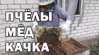 ОТКАЧКА МЁДА как я качаю мед как откачать мед Пчелы Пчелиная ферма