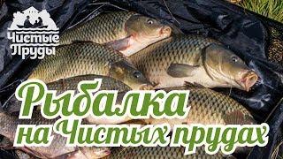 Платная рыбалка чистые пруды киров