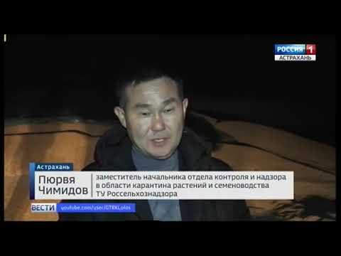 В Астраханской области Управлением Россельхознадзора пресечен ввоз зерна кукурузы без карантинных сертификатов
