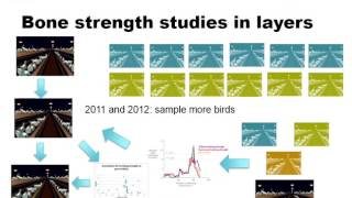 DJ de Koning: QTL mapping, GWAS & RNA sequencing to improve bone strength in laying hens.