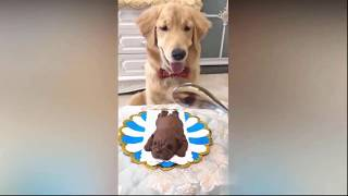 Funny Dog Reaction to Cutting Cake-try not to laugh compilation