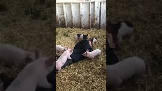 Giggles and Piglets