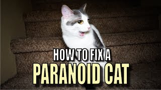 Talking Kitty Cat 56 - How To Fix A Paranoid Cat