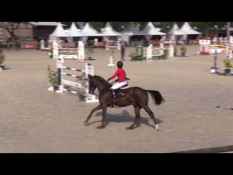 Half brother Kamasutra Picobello Z (approved stallion)