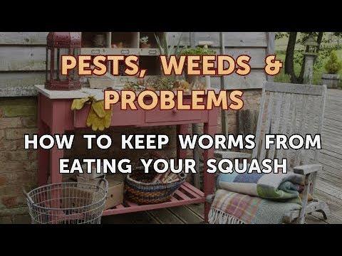 Mapupuksa ang mga parasito sa tulong ng mga herbs