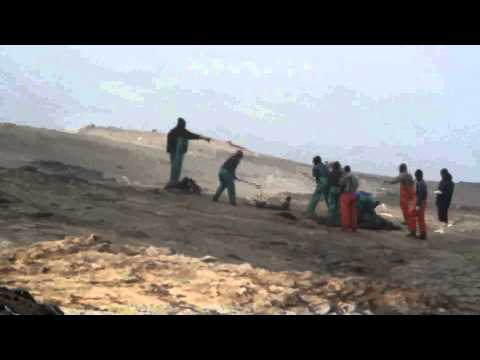 HORROR OF NAMBIA'S SEAL CULL