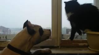 animale caine vs pisica