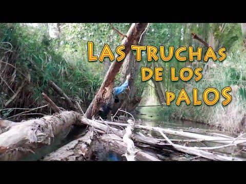 Las Truchas de los Palos | Técnicas de Pesca a Mosca Seca en Ríos y Arroyos