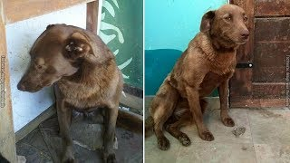 Depressed Dog Sits Alone At The Shelter For 2 Yrs: Then She Suddenly Smells Something Familiar