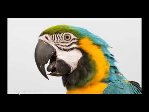 The Poison Parrot