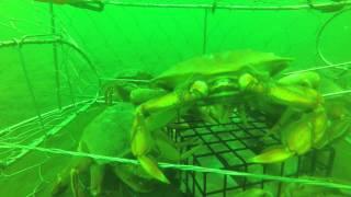 Crab Trap GoPro