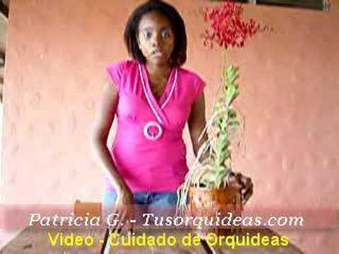 Cuidado de Orquideas. Las Renantheras