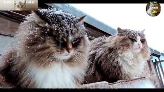 Приколы с животными - проворный кот | new crazy animals 69