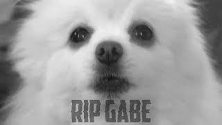 Rip Gabe..