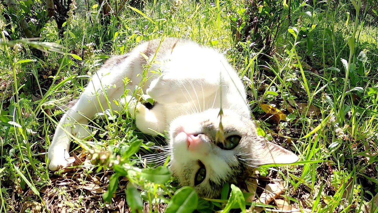 猫の鳴き声が聞こえたので、茂みの中を覗き込んでみたら・・・