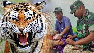 Asyik Berladang, Wanita di Jambi Diterkam Harimau dari Belakang, Suami Lawan Harimau Demi Istri
