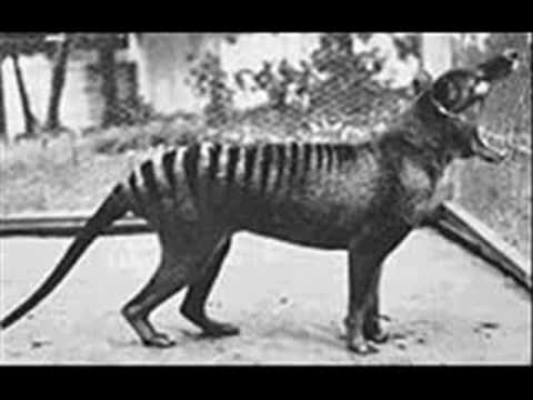 اسماء الحيوانات المنقرضة حديثا في العالم 0