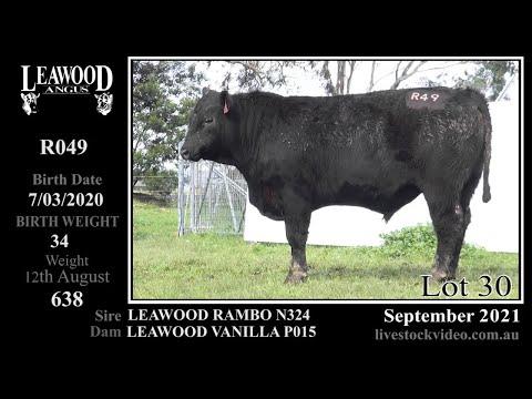 LEAWOOD RAMBO R049
