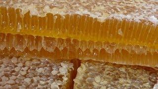 Смотреть онлайн Секреты содержания пчел на чердаке