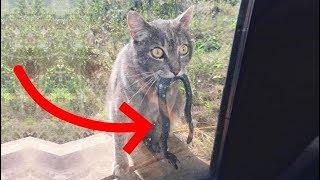 Коты достойные Оскара Смешные Кошки Смешные коты (Фото приколы 2018) - МатроскинТВ