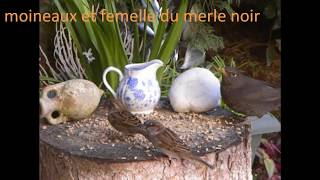 preview picture of video 'Accueil des oiseaux de mon  jardin en hiver'