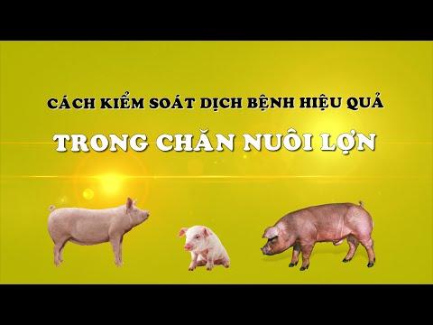 an toàn sinh học trong chăn nuôi heo
