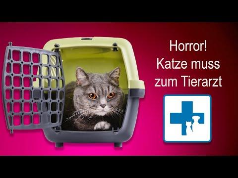 Horror: Wie bekomme ich meine Katze zum Tierarzt?