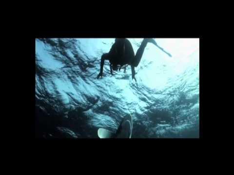 Sharkwise Trailer