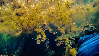 Рыбалка на озере щучье свердловской области