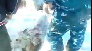 В Казахстане откопали стадо овец, которые провели под слоем снега несколько дней
