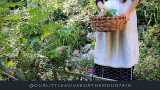 LATE SUMMER AT THE LITTLE HOUSE || A SHIFT IN THE AIR