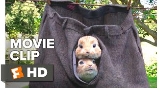 Peter Rabbit Movie Clip - Three Card Monte (2018)   Movieclips Coming Soon