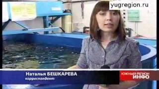 Технология разведения ценных пород рыб