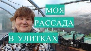 Рассада в Улитке. Обзор Моей Теплицы с Рассадой.(18.03.2017)