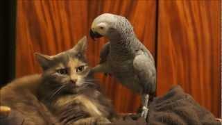 Papagaio quer que o gato lhe dê atenção, veja o que ele faz